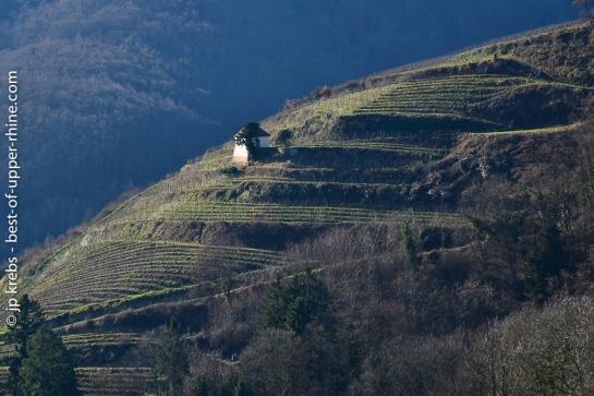 Vignes en terrasses au-dessus de Ribeauvillé