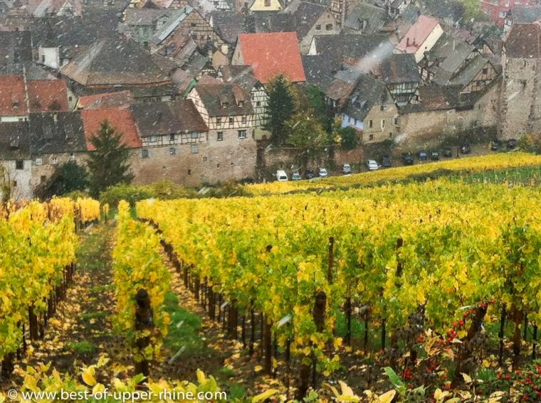 Riquewihr vu du vignoble de Schoenenbourg.