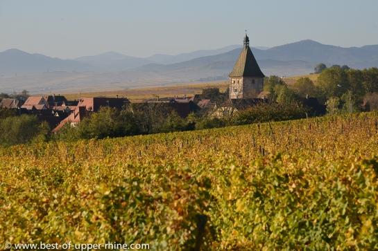 Bergheim, cité médiévale entourée de remparts et de vignes...