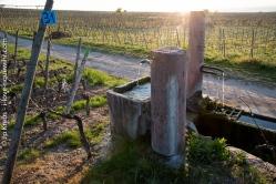 Surprise au détour du chemin : filets d'eau de source au milieu des vignes.