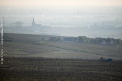 La plaine d'Alsace au petit matin vue de l'Oberberg, sur les hauteurs de Riquewihr.
