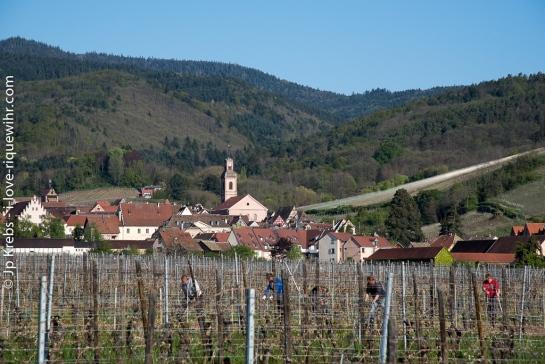 Riquewihr blotti dans son vallon au pied des Vosges.