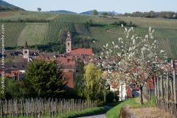 A la sortie de Riquewihr, sur la route de Kientzheim par les vignes.