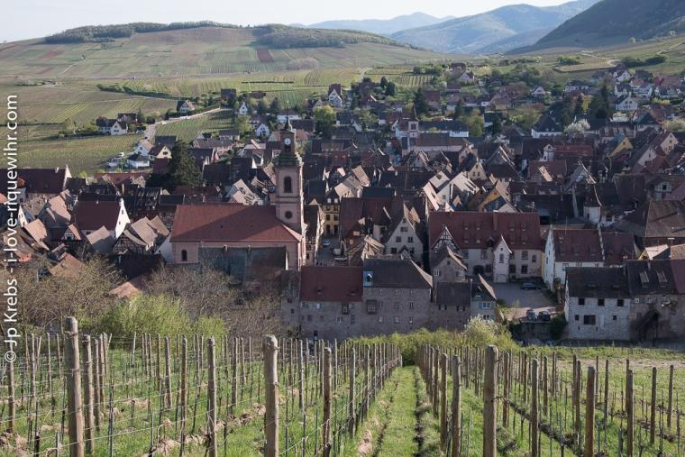 Riquewihr au printemps vu du haut du vignoble du Schoenenbourg