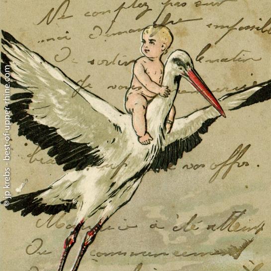 En Alsace, la cigogne a pour tâche d'apporter les bébés…