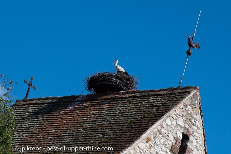 Nid de cigogne sur le clogher de l'église de Muntzenheim près de Colmar
