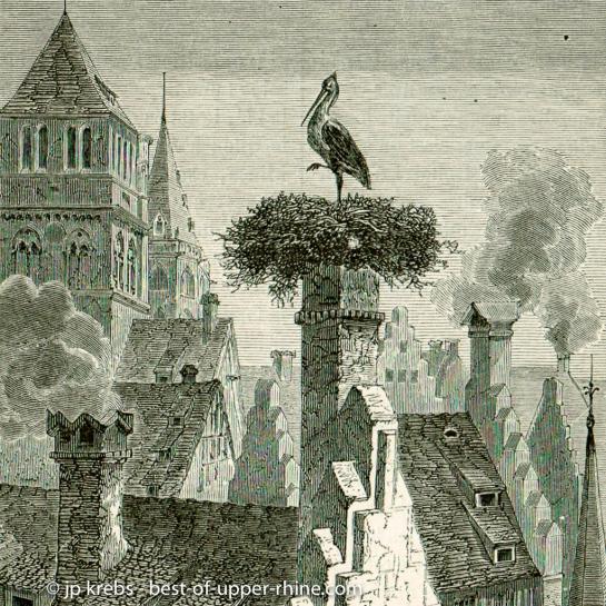 Cigogne sur les toits de Strasbourg. Gravure ancienne.