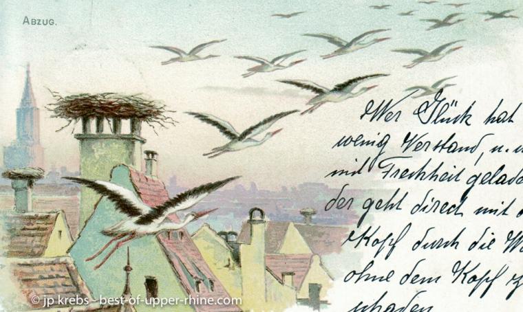 Départ des cigognes pour la migration. Carte postale ancienne…