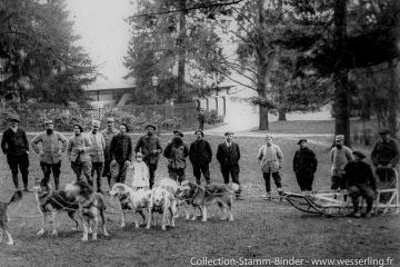 Les chiens de l'Alaska