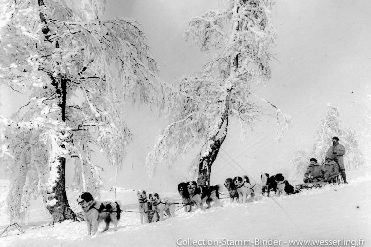1917 - Hautes-Vosges (68) Chiens de l'Alaska