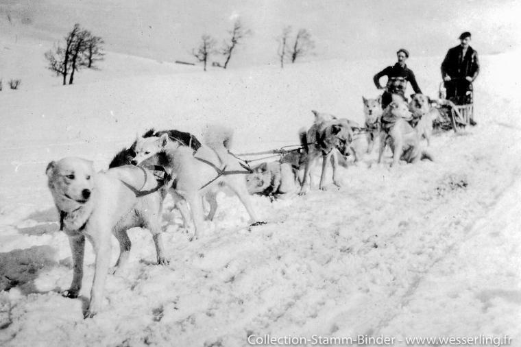 1917 - Hautes-Vosges (68) Chiens de l'Alaska et traineau