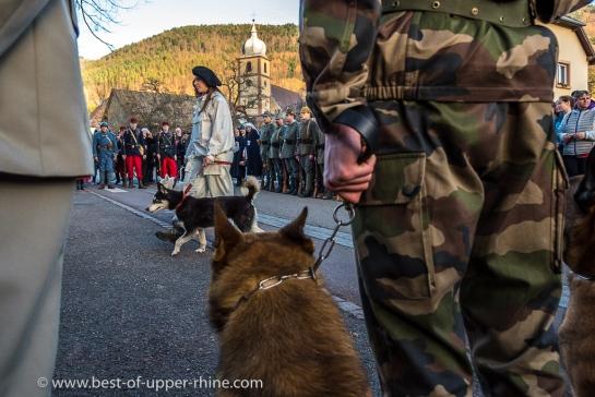 Les chiens malinois de l'armée regardent défiler les huskies. Sans bouger…