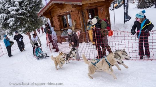 Lac Blanc course de chiens traineau