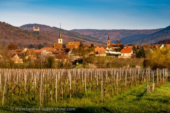 Mittelbergheim vignoble et château d'Andlau
