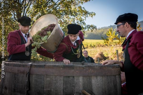 Chargement du raisin à l'aide de la hotte de bois