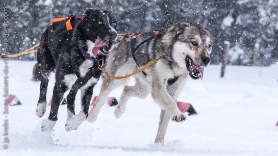 A la course de chiens de traîneau du Lac Blanc | Bons