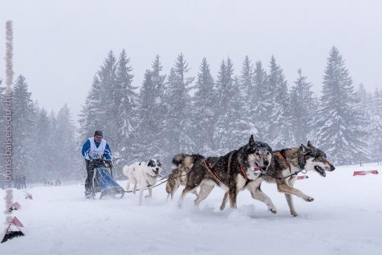 Course de chiens de traîneau au Lac Blanc, Alsace