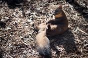 Martre au Parc animalier de Sainte-Croix à Rhodes